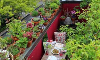 Vườn sân thượng 6m2 đỏ rực sắc dâu tây