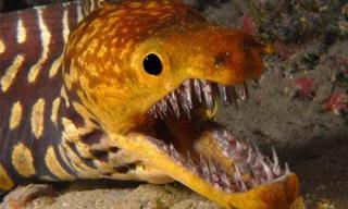 Những 'thủy quái' có bộ hàm kinh khủng nhất