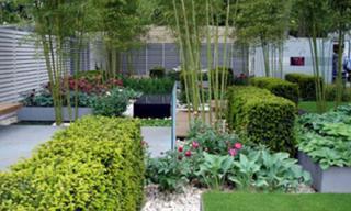 Những loại cây xui xẻo không trồng trong vườn nhà