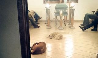 Bầy chó hoang tới dự đám tang để tỏ lòng biết ơn ân nhân