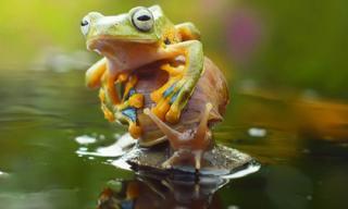 Thú vị bộ ảnh ếch cưỡi ốc sên đi du ngoạn