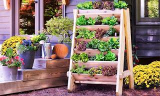 14 ý tưởng sáng tạo để có khu vườn thảo mộc trong nhà phố