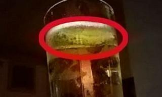 Ghê rợn phát hiện sên trong rượu táo đang uống dở