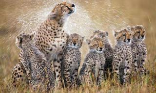 Những khoảnh khắc đáng yêu của động vật