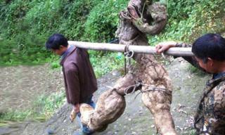 Củ sắn dây nặng 250kg, có hình thù như người đang chạy