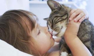Nuôi mèo trong nhà, bạn sẽ tránh khỏi nhiều căn bệnh đáng sợ