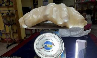 Tảng ngọc trai lớn nhất thế giới nặng 34kg được giấu dưới gầm giường