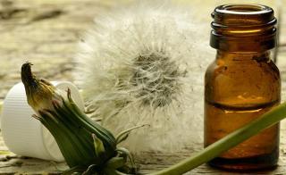 11 lợi ích sức khỏe tuyệt vời của lá và rễ bồ công anh
