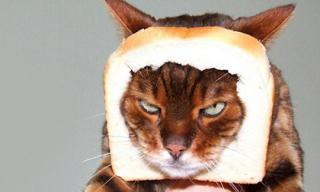Ảnh hài hước: Những chú mèo có gương mặt 'ghét bỏ cả thế giới'