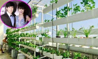 Đột nhập 'trang trại' rau sạch của vợ chồng Lý Hải - Minh Hà