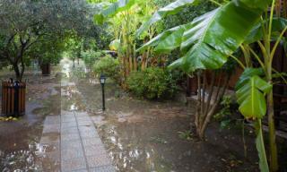 Kỹ thuật chăm sóc cây trong vườn mùa mưa lụt