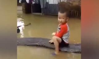 Clip bé trai 3 tuổi cưỡi con trăn 80kg trong sân ngập nước gây xôn xao