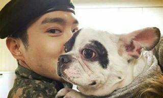 Công bố CCTV hiện trường vụ chó của Siwon cắn CEO tử vong