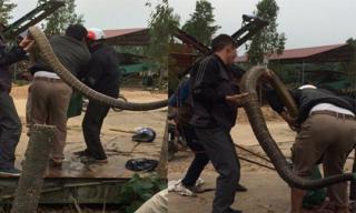 Cận cảnh người dân vây bắt rắn hổ mang chúa siêu 'khủng', nặng gần 20kg