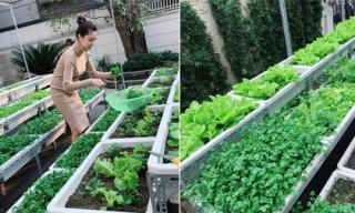 'Bà bầu' Ngọc Duyên khéo chăm được một vườn rau xanh mướt