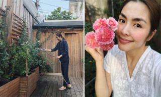 Khu vườn hoa hồng đẹp như cổ tích của vợ chồng Tăng Thanh Hà