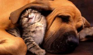 Những con vật tâm linh, không nên giết lại càng không được ăn