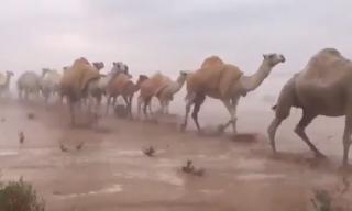 Cảnh tượng chưa từng xuất hiện trên sa mạc Ảrập 'gây bão' cộng đồng mạng