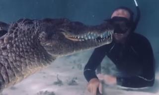 Rùng mình cảnh thợ lặn đối đầu với cá sấu khổng lồ dưới biển