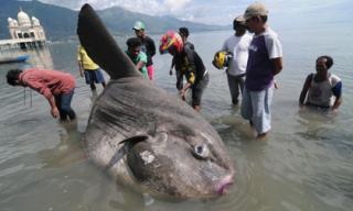 Phát hiện cá lạ nặng 1,5 tấn dạt vào bờ