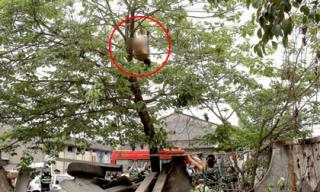 Giải cứu người đàn ông không mặc gì treo mình trên cây