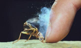 Những loài động và thực vật 'bốc mùi' nhất thế giới