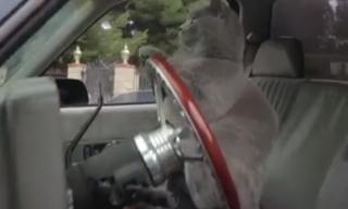 Chú mèo 'bá đạo' nhất năm