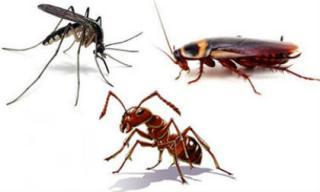 Mẹo vặt giúp xua đuổi kiến, gián, muỗi hiệu quả