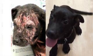 Cảm động chú chó bị bỏ rơi lở loét khắp mặt được chữa khỏi