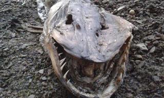 Phát hiện 'quái vật' với hàm răng sắc như dao cạo trên bờ hồ