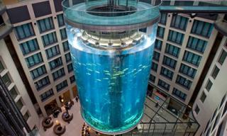 Tham quan 'thủy cung' hình trụ lớn nhất thế giới