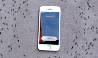 Điện thoại iPhone 'điều khiển' đàn kiến di chuyển thành vòng tròn
