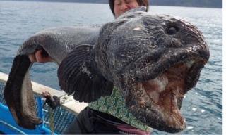 Bắt được loài cá có hình dạng kinh dị khiến nhiều người khiếp sợ