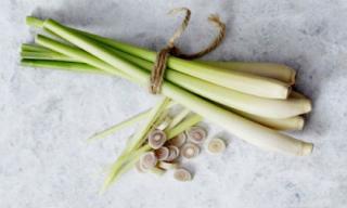 Cây sả - vị thuốc tốt cho sức khỏe