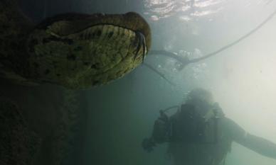 Kinh hoàng cảnh thợ lặn đối mặt với trăn khổng lồ dưới nước