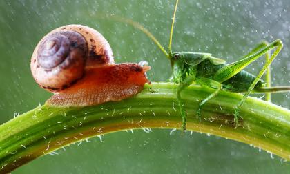 Ngắm thế giới côn trùng đẹp như ảo mộng