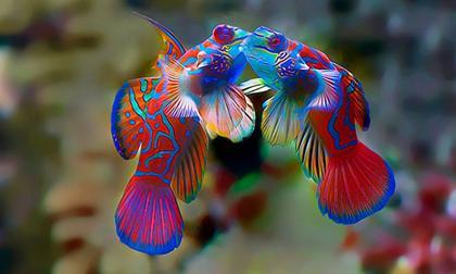 Những bức ảnh tuyệt đẹp về tình yêu của động vật