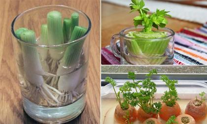 Các loại rau có thể sống mơn mởn, xanh tươi chỉ với 1 cốc nước