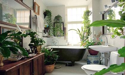 Muốn sống vui sống khỏe thì đừng quên trồng các loại cây xanh hữu ích này trong phòng tắm