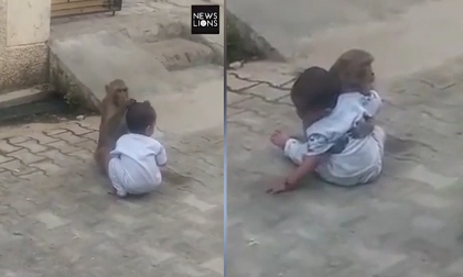 Khỉ xông vào nhà bắt cóc em bé để... có người chơi cùng