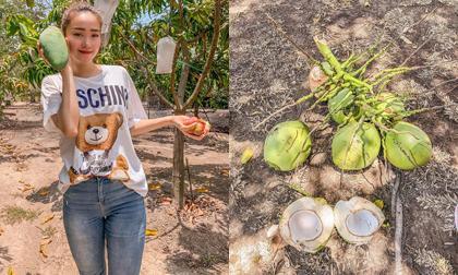 Từng mua nhà trả góp, 'đại gia showbiz' Minh Hằng giờ còn hái dừa, bắt cá trong miệt vườn 'thẳng cánh cò bay'