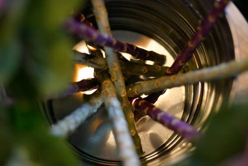 Hoa đẹp 20-10: Lạ mắt 2 mẫu cắm hoa Bắp cải - 6
