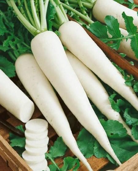 của cải trắng,công dụng của cải trắng,củ cải trắng chữa bệnh,thực phẩm chữa bệnh