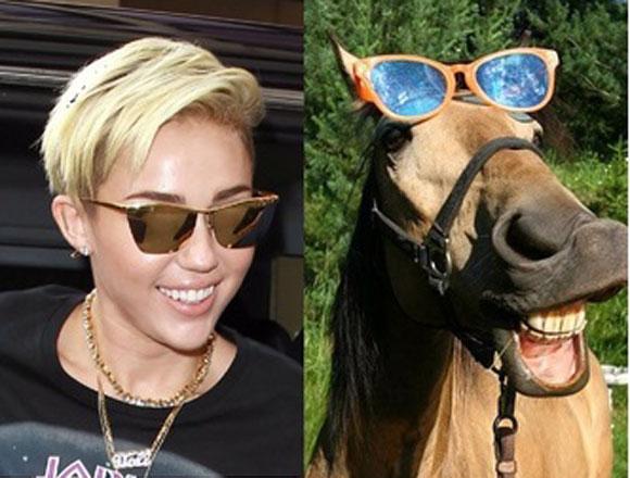 Miley Cyrus,Ảnh hài hước,Ảnh vui nhộn,Ảnh chế