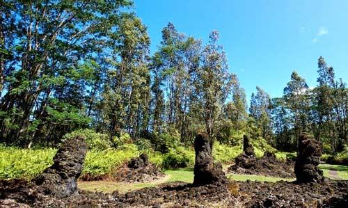 Rừng cây,rừng cây nham thạch,khám phá rừng cây nham thạch độc đáo ở Hawaii