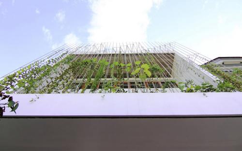 1419582377 12 26 2014 1 04 49 pm Tham quan ngôi nhà mặt tiền trồng đầy rau xanh của cặp vợ chồng đã về hưu