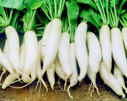 Củ cải trắng,Lợi ích của củ cải trắng,Thực phẩm không ăn cùng củ cải trắng