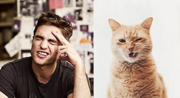 Ảnh cười động vật,Ảnh chế,Ảnh vui,Ảnh hài hước