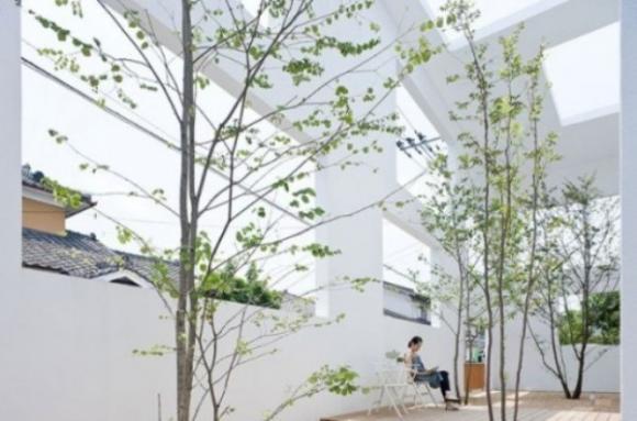 Không gian sống thư giãn với vườn cây trong nhà 2