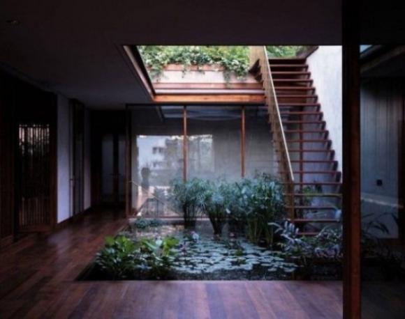 Không gian sống thư giãn với vườn cây trong nhà 4